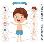vector illustration of human... | Shutterstock .eps vector #1123561574