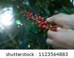 close up   hands collecting... | Shutterstock . vector #1123564883
