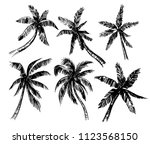 set of palm trees sketches.... | Shutterstock .eps vector #1123568150