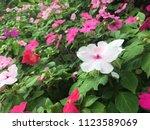 colorful rain flower | Shutterstock . vector #1123589069