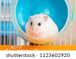 Stock photo close up white hamster in hamster wheel 1123602920