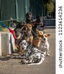 Stock photo dogs tied to fence waiting for dog walker in buenos aires downtown argentina 1123614236