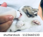 Stock photo catnap kitten with his bottle of kitten milk replacer he s an orphan and needs special care the 1123660133