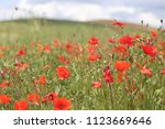 spring in tuscany italy ... | Shutterstock . vector #1123669646