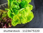 Small photo of Organic food concept with raw fresh lettuce and romano salad leaves on rustic background