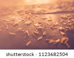 tamarind flower dropped on the... | Shutterstock . vector #1123682504