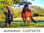 Stock photo chestnut horse at tree landscape horse in pasture on horse farm horse in nature landscape 1123710719