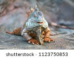 Funny Animals Lizard Iguana....