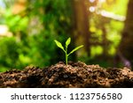 the seedling are growing in the ... | Shutterstock . vector #1123756580