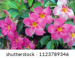 flowers on display in a market...   Shutterstock . vector #1123789346