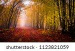 autumn forest slovakia | Shutterstock . vector #1123821059