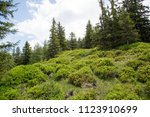 high altitude alp forest with... | Shutterstock . vector #1123910699