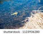 plastic bottles and garbage... | Shutterstock . vector #1123936280