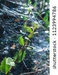 the dark green branch of the...   Shutterstock . vector #1123994786