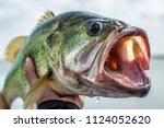 big bass largemouth   fishing   Shutterstock . vector #1124052620
