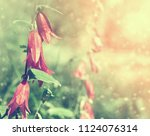 colorful floral background with ... | Shutterstock . vector #1124076314
