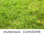 bright spring green grass... | Shutterstock . vector #1124101058