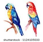 flying tropical parrot ara.... | Shutterstock . vector #1124105033