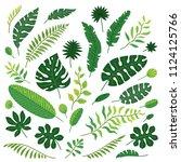 set of tropical leaves. vector...   Shutterstock .eps vector #1124125766