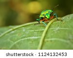 Green insect macro shot . macro ...