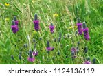 Meadow With Purple Prairie...