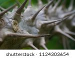 spiked branch forest | Shutterstock . vector #1124303654