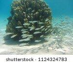 beautiful house reef in dahab...   Shutterstock . vector #1124324783