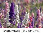 field of multicoloured... | Shutterstock . vector #1124342243