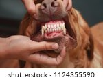 sharp teeth of a dog. the jaw... | Shutterstock . vector #1124355590