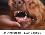 sharp teeth of a dog. the jaw... | Shutterstock . vector #1124355593