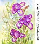 purple irises on meadow... | Shutterstock . vector #1124377916