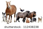 Stock photo group of farm animals in front of white background 112438238