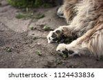 fluffy dog sleeping  paws | Shutterstock . vector #1124433836
