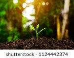 the seedling are growing in the ... | Shutterstock . vector #1124442374