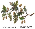 Watercolor Handsketched Oak...