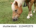 horses head while grazing | Shutterstock . vector #1124492573