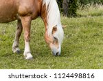 brown horse with white mane... | Shutterstock . vector #1124498816