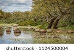 cork oak forest   quercus suber ... | Shutterstock . vector #1124500004