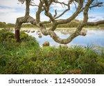 cork oak forest   quercus suber ... | Shutterstock . vector #1124500058