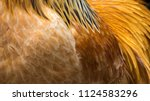 background with feathers of a... | Shutterstock . vector #1124583296