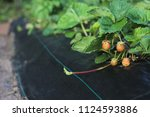 close up view of garden... | Shutterstock . vector #1124593886
