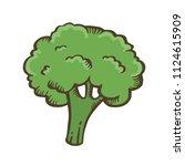 broccoli hand drawn... | Shutterstock .eps vector #1124615909