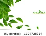 green tea leaves manu and...   Shutterstock .eps vector #1124728319