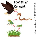 science food chain concept... | Shutterstock .eps vector #1124757713