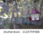red male northern cardinal... | Shutterstock . vector #1124759588