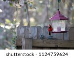red male northern cardinal... | Shutterstock . vector #1124759624