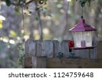 red male northern cardinal... | Shutterstock . vector #1124759648