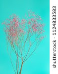 dry pink baby's breath flowers...   Shutterstock . vector #1124833583