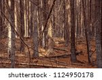 forest mystical landscape with... | Shutterstock . vector #1124950178
