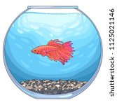 there is red betta fish in the... | Shutterstock .eps vector #1125021146